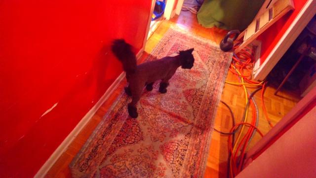 Buster's Lion Cut