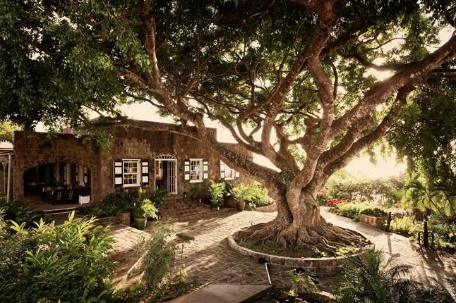 Montpelier Plantation Nevis