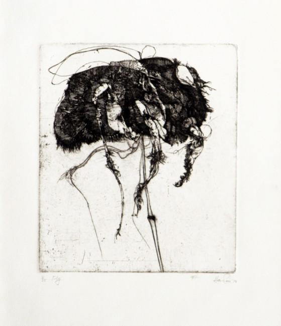 george-hawken-fly-1976-etching-ed-25-1024b-559x650